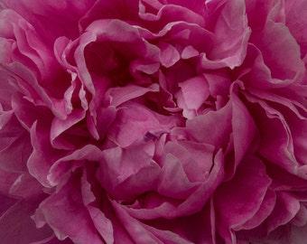 Pink Peony Flower Photography, Pink Petals, Nature Photography, Pink Flower, Girls Room Decor, Home Decor, Wall art, Macro Photography