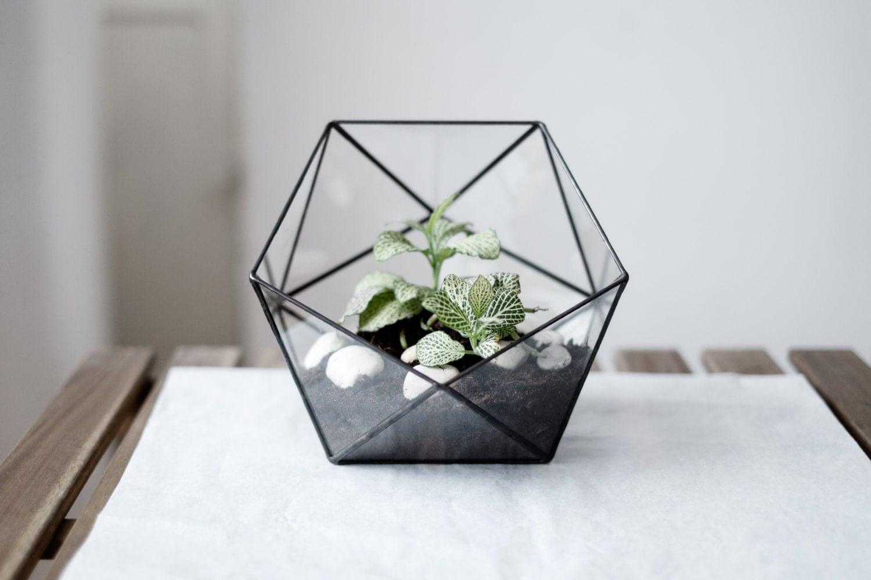 geometric glass terrarium icosahedron handmade. Black Bedroom Furniture Sets. Home Design Ideas