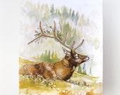 Floral Elk 11x14