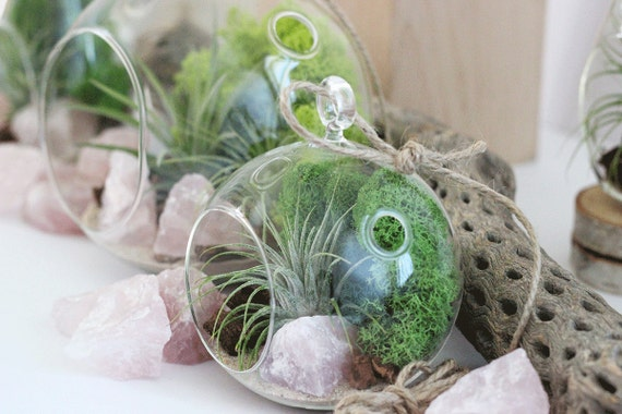 Terrarium Kit Rose Quartz + Air Plant with Green Reindeer Moss || Small Round