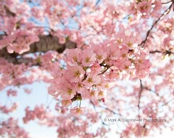 Cherry Blossom Photography Nature Photography Pink Flower Photos Peach Home Decor Spring Flowers bokeh sakura Washington DC Print Flowers