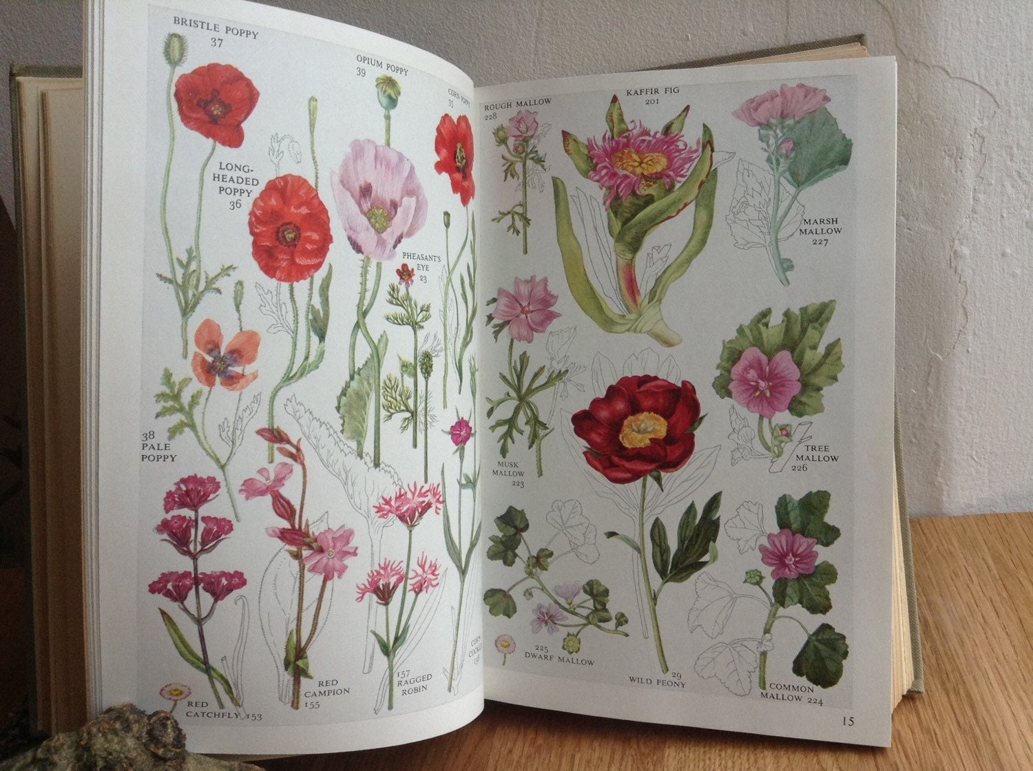 Wildflowers -- identification guide -- Discover Life