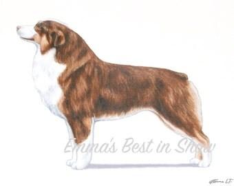 Miniature American Shepherd Dog - Archival Fine Art Print - AKC Best in Show Champion - Breed Standard - Herding Group - Art Print