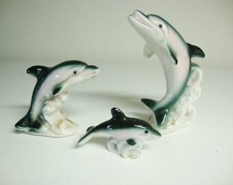 Miniature Dolphin Family