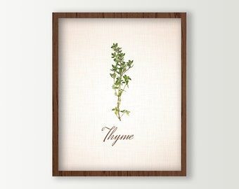 Herbs Kitchen Decor - Food Art - Kitchen Art - Thyme Sprigs Culinary Prints - Green Kitchen Decor - Cooking Herbs Wall Art - Kitchen Sign