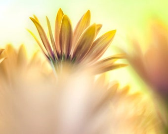 Yellow Flower Photography, Flower Wall Art, Flower Photo Print, Pastel Wall Hanging Photography Print, Daisy Photograph