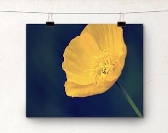 Fine Art Photography Print, Yellow Flower Poppy Photograph, Spring Flowers