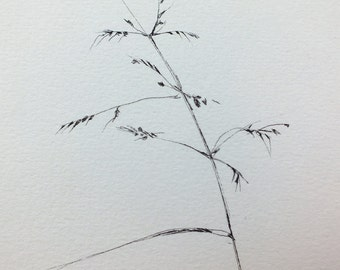 Little Grass, inkt , inkdrawing, drawingart,