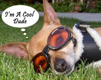 Cool Dude Chihuahua Fridge Magnet 7cm by 4.5cm