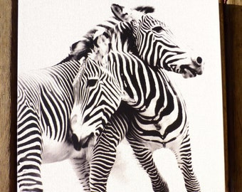 Zebra Canvas Gallery Wrap ~ Black and White Art Canvas Print   ~  12 x 12 IN STOCK ~ Ready to Hang Canvas Wrap ~ Large Animal Photography