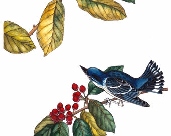Cerulean warbler - archival print from my original watercolor and pen and ink painting, vintage, botanical, bird, leaves, audubon