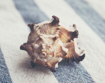 """Seashell photography """"Shell 4"""", nautical still life photography, retro, hazy, dreamy, bokeh, soft focus"""