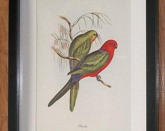 J Gould vintage print, Gould framed wall art - 11''x14'' frame, exotic bird art