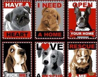 Animal Rescue - PANEL