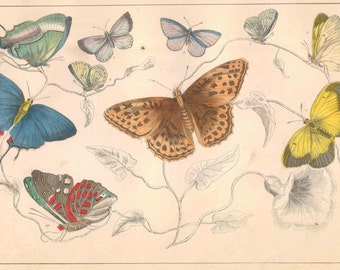 Vintage Butterfly Collection lithograph print Antique 1800s rare exotic butterflys home decor