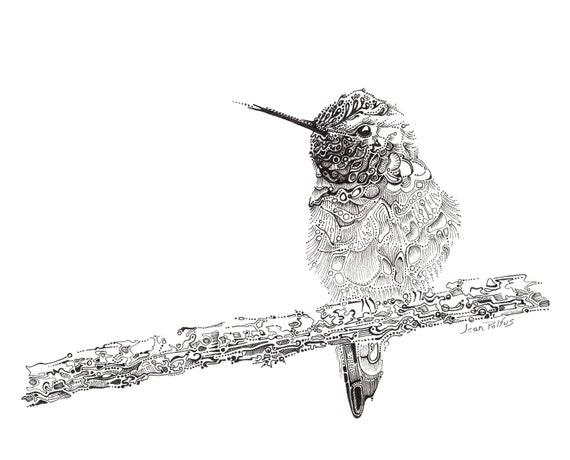Line Drawing Hummingbird : Hummingbird illustration fine line artwork black and white