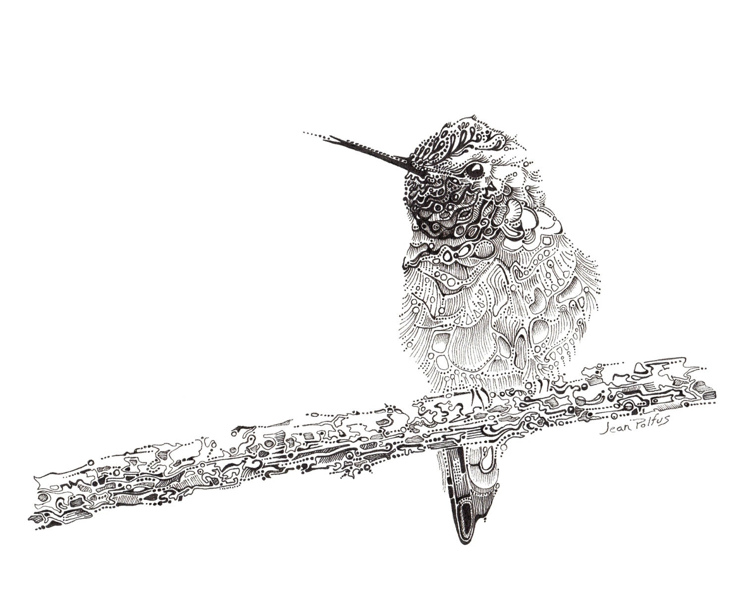 Fine Line Drawing Artists : Hummingbird illustration fine line artwork black and white