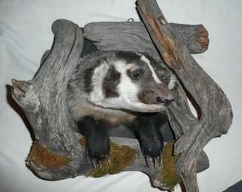 Badger Shoulder Mount