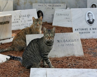 Athens Photography - Cat Print - Cemetery Photograph - Greece - Travel