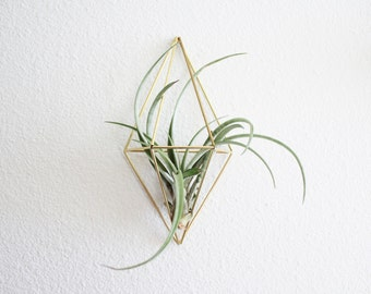 Wall Sconce Plant Holder : The Original Wall Sconce Brass Air Plant Holder Modern