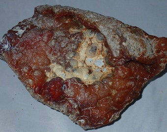 Large Carnelian, Yellow, Blue Agatized Coral Fossil