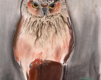 8.5x11 Screech Owl in Pastels