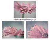 Pink flower print set of 3, gerbera daisies flower photography, neutral wall art, 3 8x10, 11x14 prints, pale pink blue grey bedroom decor