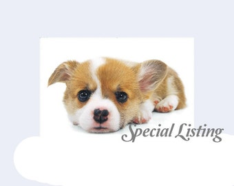 special listing -- Simba