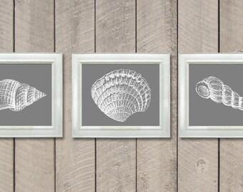 Sea Shells Set of 3 Prints Grey Gray White Wall Decor Nautical Print Ocean Art Marine Beach House Bathroom Nursery Shell