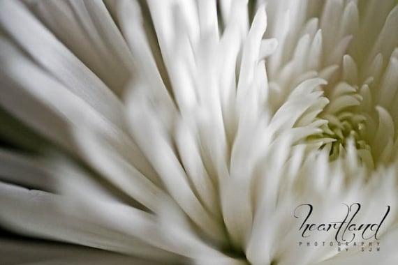 Large Flower Print, Neutral Large Art, White Flower, Spider Mum, Macro Photography, Large Wall Art, Extra Large Prints, Oversized Art