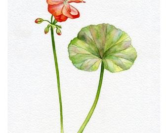 SALE PRINT! Geranium, Print of Original Watercolour Painting, Photoprint