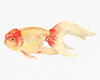 Goldfish Vintage Image - Shukin Goldfish - Japanese Fish Digital Clip Art for Transfers, Prints, Decoupage, Collages, Invitations, Cards...