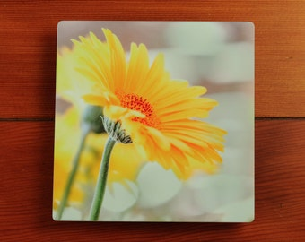 Beautiful Flower Photography Print on Metal