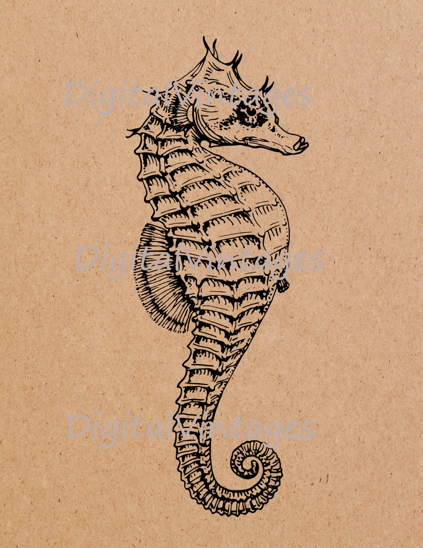Seahorse Sea Horse Vin...