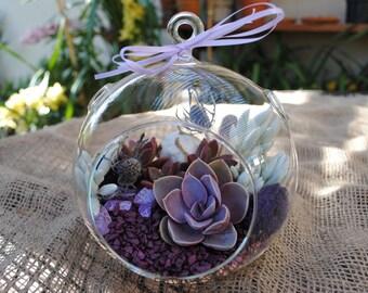 "Succulent Terrarium DIY Kit ""Pretty in Purple"" -XLarge Globe Terrarium-7 inch or 8 inch-Gardener Gift-Housewarming Gift-Birthday-Birthday"