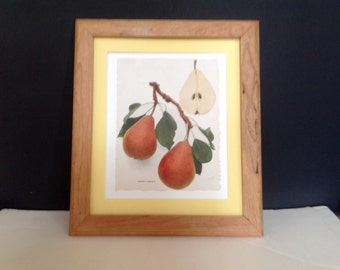 Delicious Pears of New York: Beurre Clairgeau
