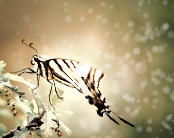 Butterfly Photography: Nature Photo, Boho Wall Decor, Ethereal Wall Art, Gold Cream & Sage Green, Spring