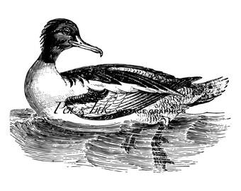 Goosander Merganser Duck Digital Vintage Graphic