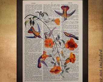 Audubon Birds Dictionary Art Print Hummingbird Wall Art Fine Art Print Home Gifts for Birders Decor Gift Ideas da709