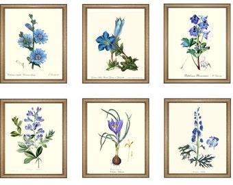 "Botanical Prints Set. Any 6 BLUE botanical prints. Floral Wall Art Set. Blue Flower prints set.  5x7"" 8x10"" 11x14"""