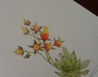 Succulent Rosette - Watercolour painting