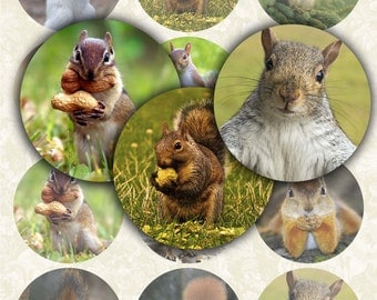 Squirrel 2.5 inch Digital Collage Sheet Printable circle images for Pocket Mirrors Magnets Labels Gift Tags Scrapbook