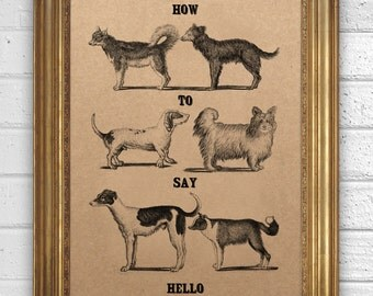 How to say Hello - Dogs behaviour -  Art Print