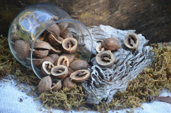 Hickory nut halves (50 count), rustic decor, vase filler, nature crafts, table scatter