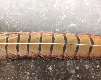 """20"""" inches Super Long Pheasant Feathers - Tail Feathers- 20"""" inches feathers- 1562"""