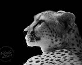 Wild Cheetah Fine Art Photography, Big Cat, African Wildlife and Animal Home Decor, Wall Art
