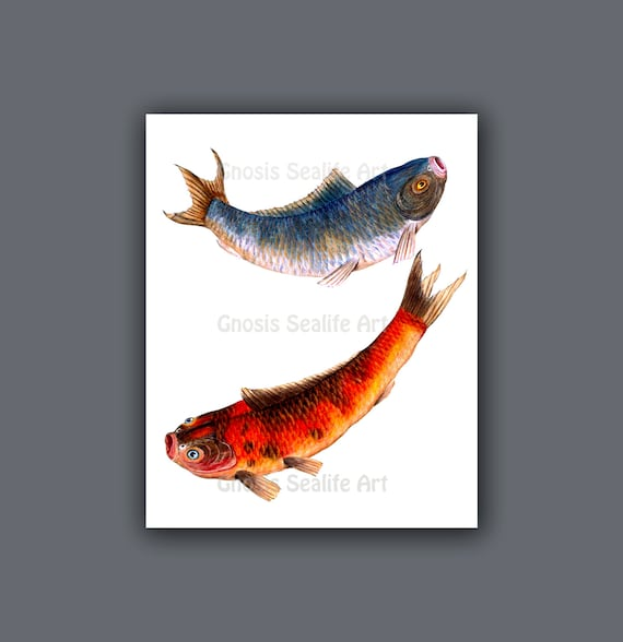 Chinese home decor koi gold fish wall art print 3 symbol for for Koi home decor