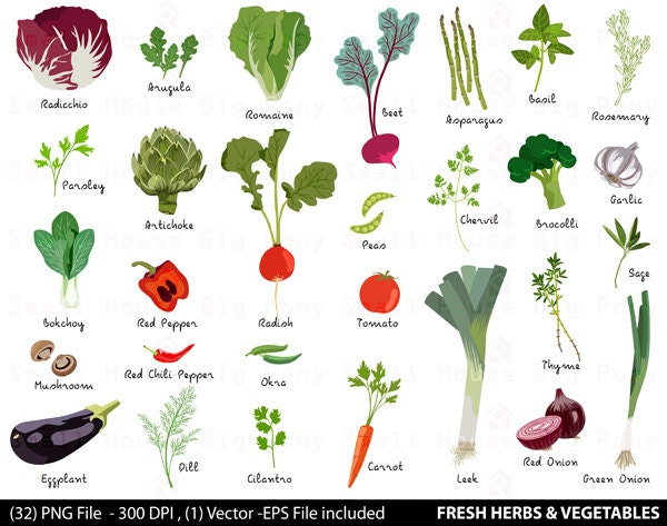 Vegetable digital clipart fresh herbs clipart by smallhousebigpony