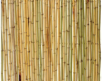 "Rolled Bamboo Fence, 3/4"" diameter poles, 8'L x 4'H"