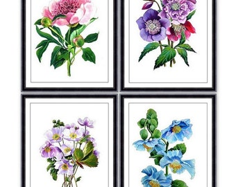 BOTANICAL Print SET of 4 Art Print  - Summer Vintage Room Wall Home Decor